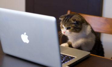 Cara Mengecek Laptop Bekas Masih Bagus atau Tidak